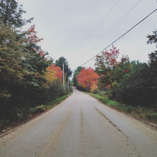 foliage3.jpg
