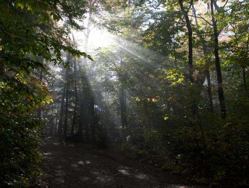 summer-trees-sunlight-trail.jpg