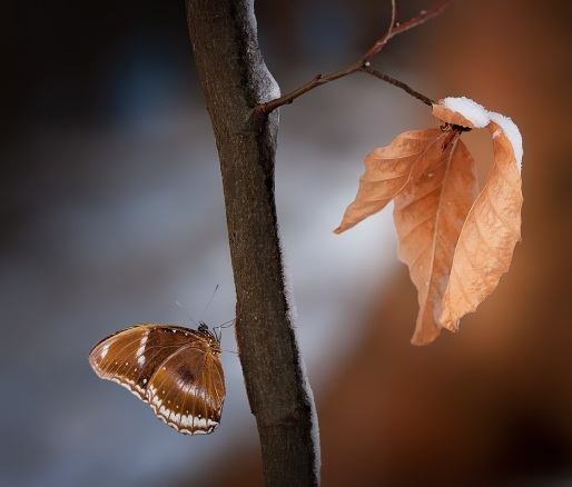 road-leaves-brown-true-leaves-163855.jpeg
