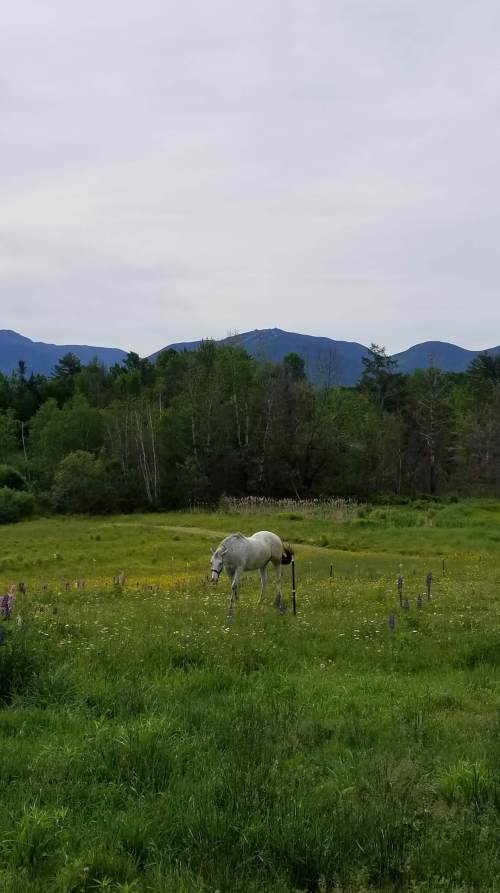 horse with white mountains in background